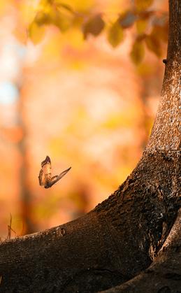 vlinder-bij-boom